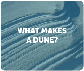 What Makes a Dune?