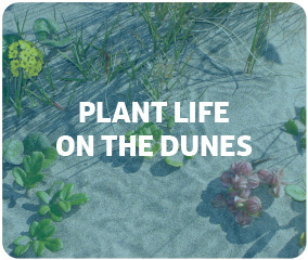 Plant Life on the Dunes
