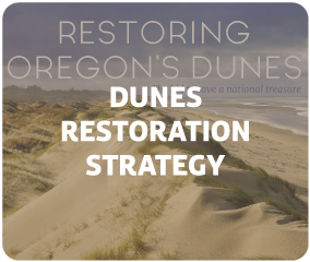 Dunes Restoration Strategy